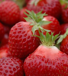 Hood Strawberry from web