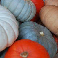 Pumpkin Asst