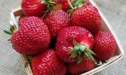 Strawberries Hood 2018